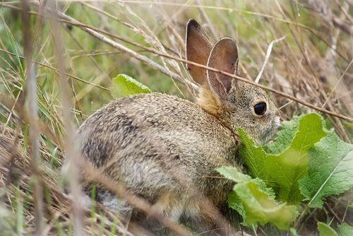 Lake Murray ~ Bunny