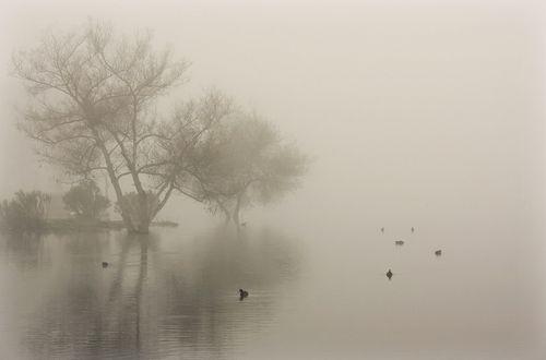 Lake_murray_fog1_sml