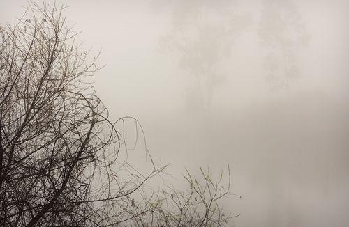 Lake Murray ~ Early Morning Fog
