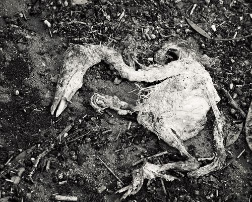 Dead Bird - Lake Murray, San Diego
